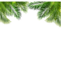 frame with green palm leaf isolated white vector image