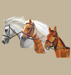 Horses in bridle vector