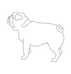 Pug hound line vector