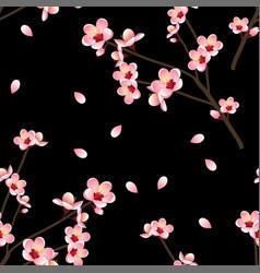 prunus persica - peach flower blossom on black vector image vector image