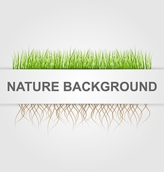 Abstract nature background Green grass vector image