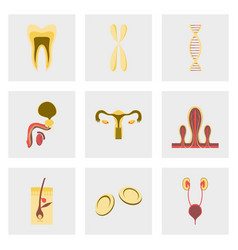 icons set in flat style human organs cell vector image