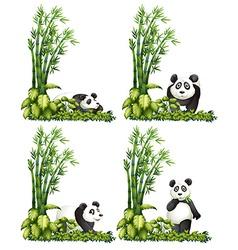 Panda and bamboo vector image