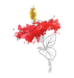 flower of hibiscus vector image