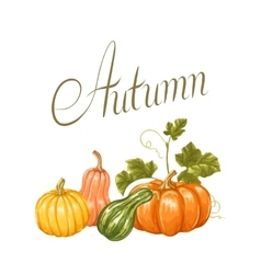 Autumn background with pumpkins Decorative vector image