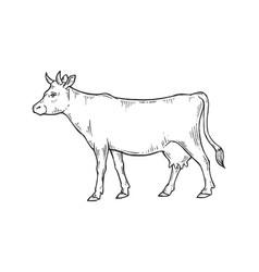 cow rural farm animal sketch engraving vector image