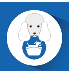 Digital pet shop with poodle and dog grooming vector