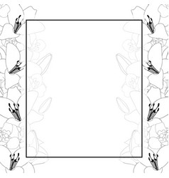 Lily and iris flower outline banner card border vector