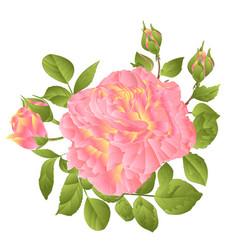 Pink rose orange center stem vector