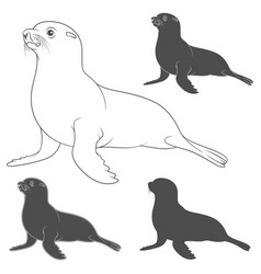Set of black and white with fur seal vector