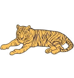 Sketch beautiful tiger on a white background vector