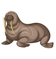 Walrus with sharp teeth vector