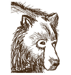 animal wild bear face hand-drawing vector image vector image