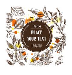 background sketch herbs herbs - bay leaf vector image