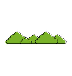 bush isolated plant vector image