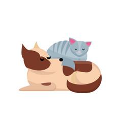 cozy pet friends concept grey cat sleaps on dog vector image