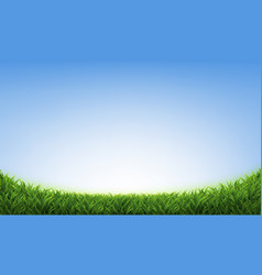 green grass with blue sky vector image