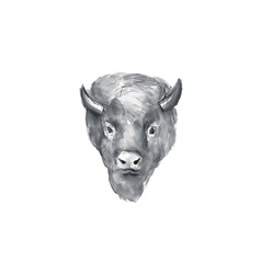 American Bison Head Watercolor vector