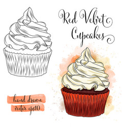 Beautiful hand drawn watercolor red velvet vector