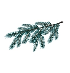 Blue realistic branch of fir tree Fir branches vector
