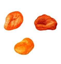 Dried apricot vector