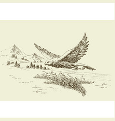 hawk flying in natural landscape hand drawing vector image