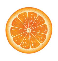 Orange slice isolated on white background vector