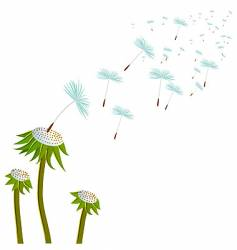 three dandelions on the wind vector image