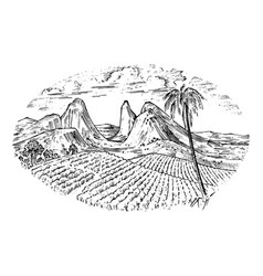 Coffee field cocoa plantation vintage landscape vector