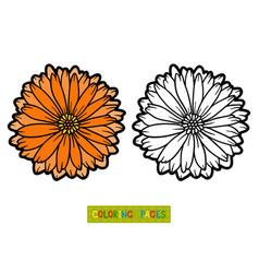 Coloring book flower calendula vector