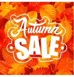 lettering of autumn sale text and fall leaves vector image
