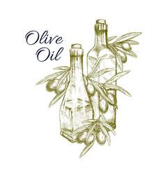 olive oil sketch and fresh green olives vector image