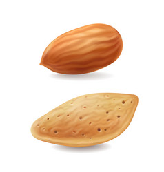 almonds nuts with shell isolated realistic vector image