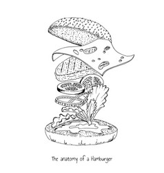 Anatomy a hamburger vector