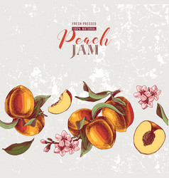background with hand drawn peach seamless border vector image