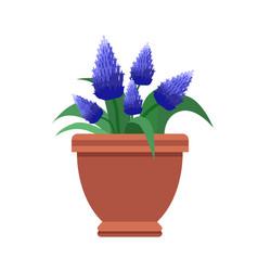 muscari room flower plant vector image