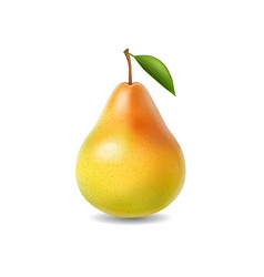 Pear realistic isolated vector