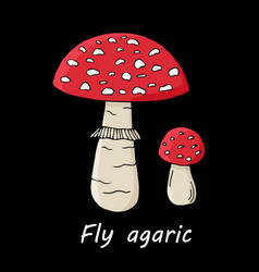 poison mushroom on black background vector image