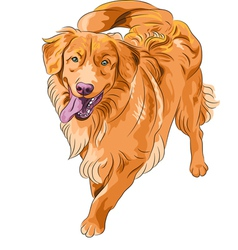 golden Retriever dog vector image