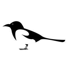 magpie bird on white background vector image