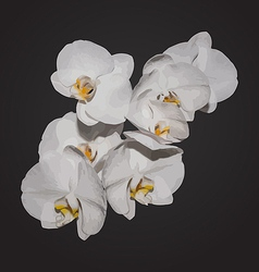Romantic beautiful orchids blossom isolated on vector image