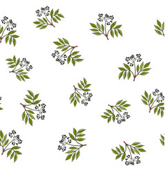 Seamless pattern with hand drawn elder branches vector