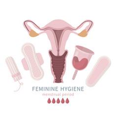Set menstrual cup tampon napkin liners vagina vector