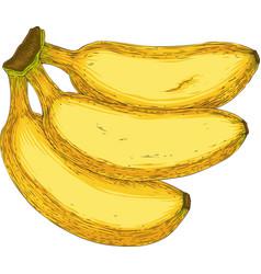 three ripe yellow banana vector image