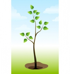 Tree plant on the ground vector