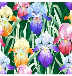 Seamless Background with Multicolored Iris Flowers vector image vector image