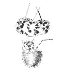 coconuts hand drawn sketch vintage style vector image