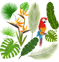 Tropical leaves flowers and macaw vector image