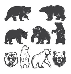 Bears animals set vector