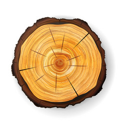 Cross section tree wooden stump round cut vector
